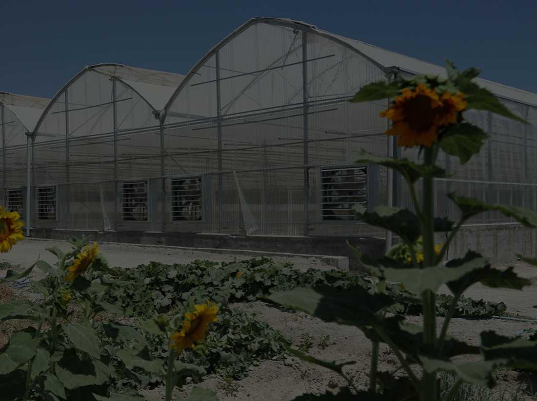 تولید کننده سازه های گلخانه