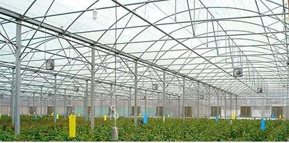 پوشش پلاستیک سقف گلخانه شرکت پارس دشت چهلستون